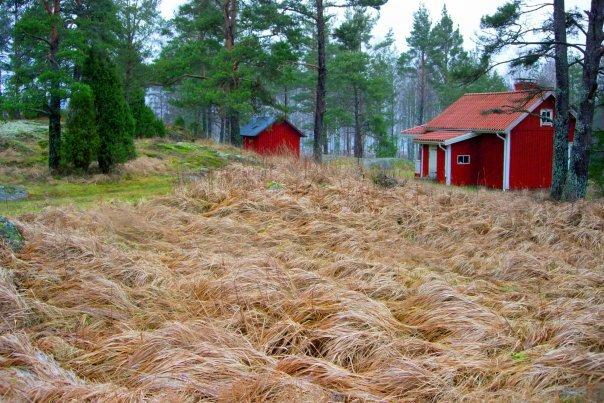 остров Torsö